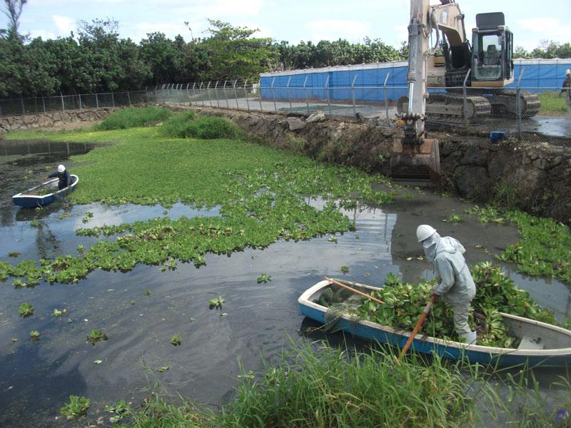 浮き草を集める作業