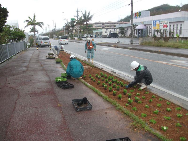 公共施設花壇の花植え